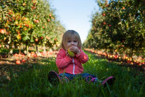 A toddler eating fruit
