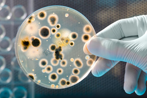 Bacteria under a magnifying lense
