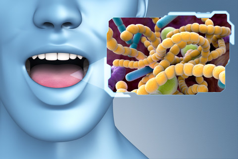 Bacteria in the mouth